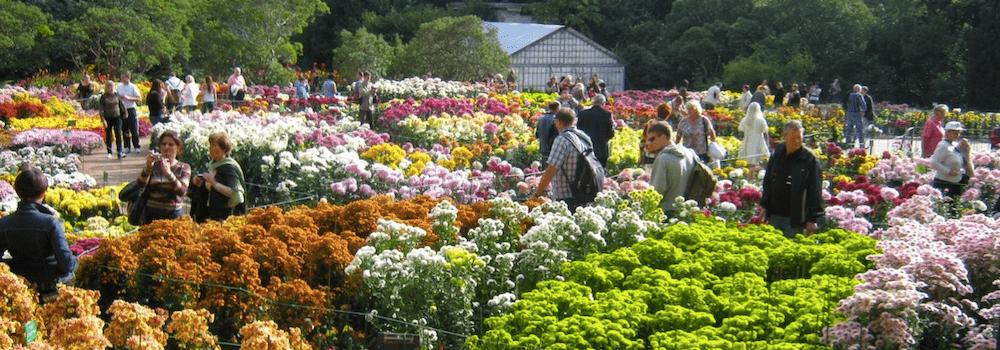 Бал Хризантем 2018 в Никитском ботаническом саду