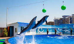 Самые лучшие отели и санатории Севастополя на берегу моря и не только